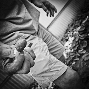 photo-main-fraise-300x300