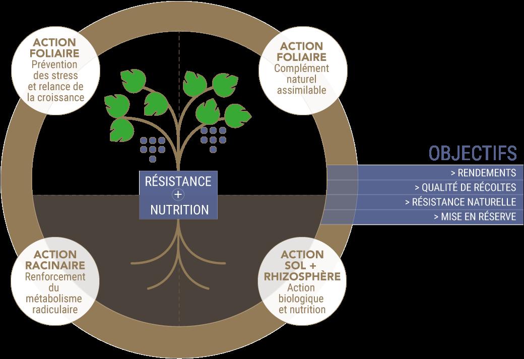 Programme Nutrition et Stimulation Vigne avec pour objectifs rendements, qualité de récolte, mise en réserve...