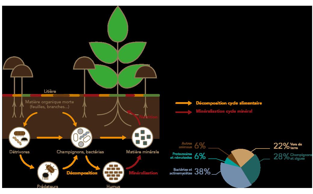 Schéma du sol usine de recyclage par Frayssinet