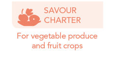 Savour charter by Frayssinet