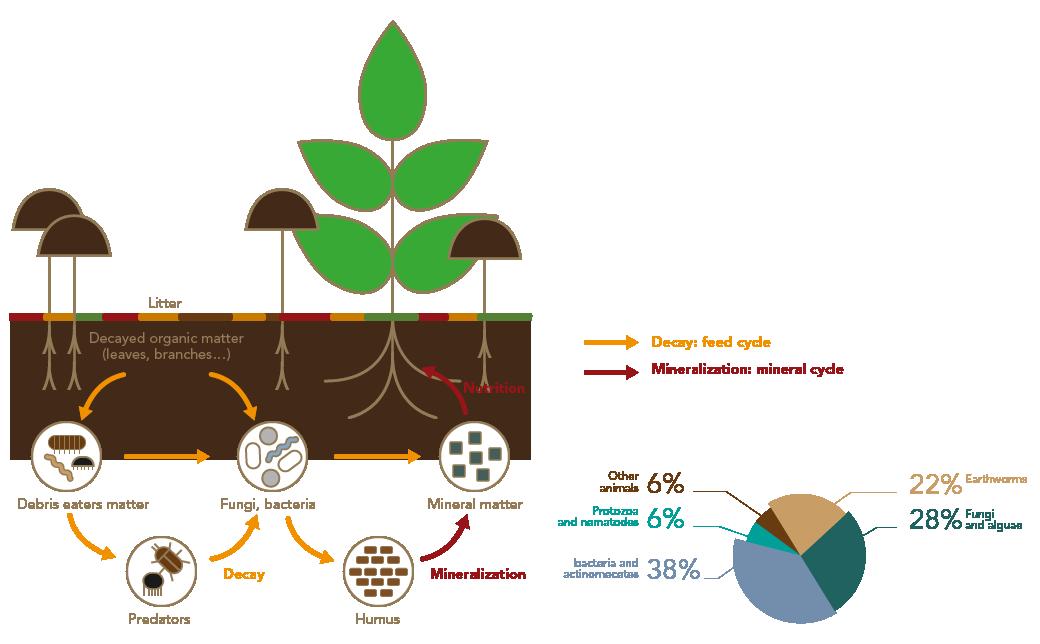 Le sol, une usine de recyclage par Frayssinet
