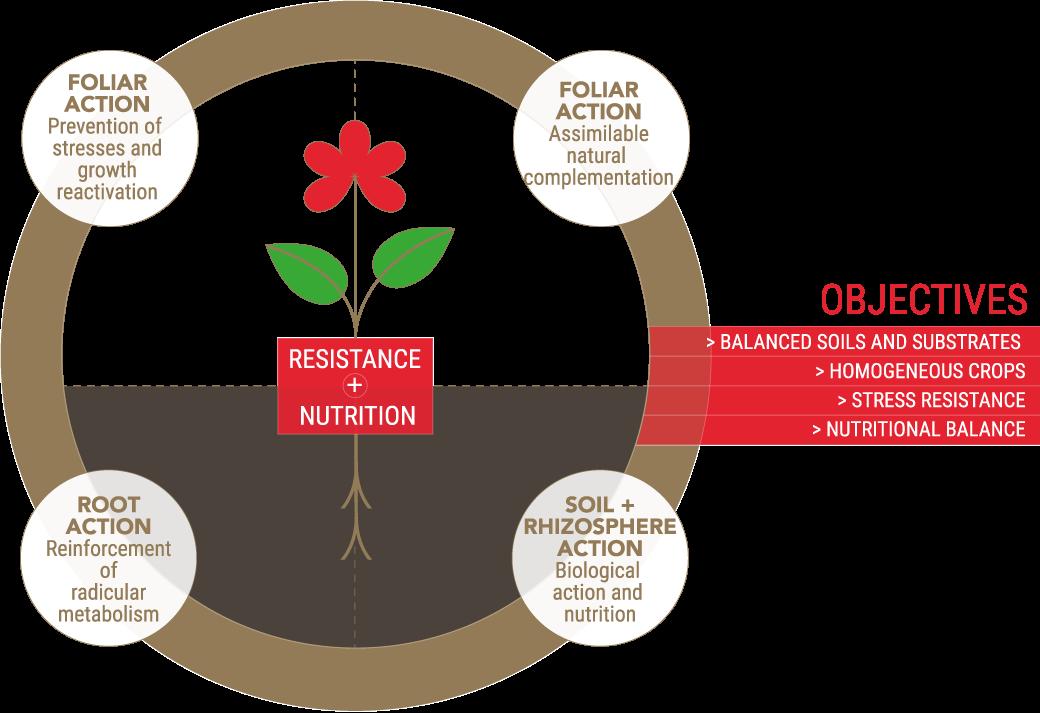NSP - Flowering: Optimal flowering objectives