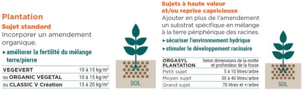 Sol arbres arbustes 1